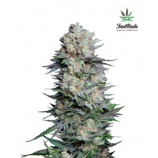 Fast Buds Mexican Airlines Auto
